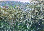 Клод Моне Ветёй, цветущие сливы 1879г